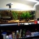 熱帯魚&水槽&飼育道具譲ります(^O^)