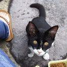 飼われて居た猫