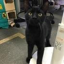 黒ネコさん!