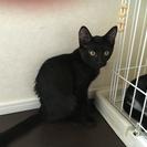 黒猫 ♂3ヶ月