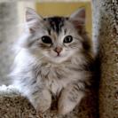 猫のベランダ脱走防止柵を一緒に作ってくださる方募集!