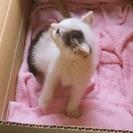 産まれたばかりの可愛い子猫【白黒】