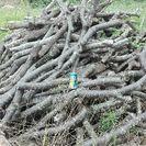 無料!広葉樹の丸太。半年程度、雨ざらし。茨城県行方市。