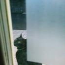 迷い猫の情報です。