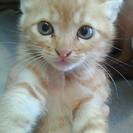 とても愛らしい1か月の赤ちゃん猫!