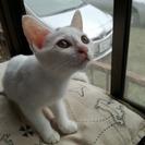 生後2か月くらいの子猫です。オス1匹メス5匹います。かわいいですよ!
