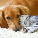 ペットのお世話に困ったら、ぜひご相談ください♡