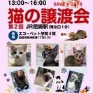 第2回 猫の譲渡会~JR尼崎~