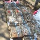 小鳥のフリーマーケット(即売会)