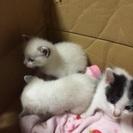 生後1か月位の子猫3匹と、1歳&半年位のオス猫です。