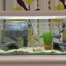 【無料】初心者用の温帯魚セット お魚×9匹