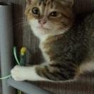 生後3ヶ月、甘えん坊の可愛い三毛の女の子です。