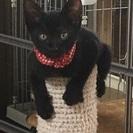人慣れ抜群な黒猫