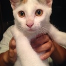 生後4ヶ月くらいの三匹の仔猫