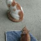 庭にくる猫ちゃんの息子くん猫ちゃん1匹