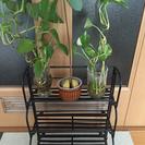 スパイスラック&瓶入り観葉植物