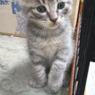 子猫の新しいお家募集中