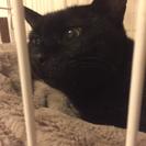 賢く穏やかな2歳くらいの黒猫の女の子