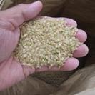 平成28年度 新米 三重県産コシヒカリ 30kg