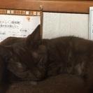 毛並みがとても可愛い猫ちゃん