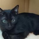 4ヶ月の可愛い黒子猫♪