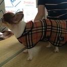 犬用バーバリーコート