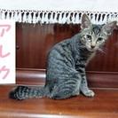 子猫2匹の里親募集 ★(ふじ子の子)