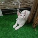 生後約4か月のかわいいメス猫ちゃんです。