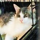 美形子猫3兄妹(5ヶ月)