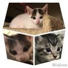 8月26日生まれの子猫達です。