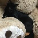 黒猫ちゃん 1歳
