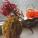 ハロウィン飾りかぼちゃ&鷹の爪