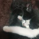 2匹の子猫の里親を募集しています