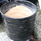 ガーデニング 5号・黒の陶器鉢