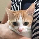 甘えん坊の美猫 愛ちゃん 5か月