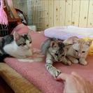7月生まれの3匹の子猫(オス2匹・メス1匹)