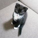 生後1ヶ月半の黒猫&靴下姉弟です。