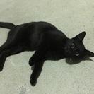 黒猫好きな方