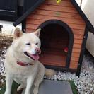 中型犬用の犬小屋