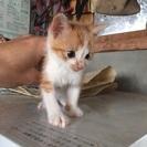 【至急】子猫の里親を探しています。