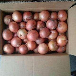 農家直送長沼町産減農薬玉ねぎ20キロLサイズ。