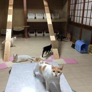 ☆保護猫たちのお世話を手伝ってくださる方を探しています☆