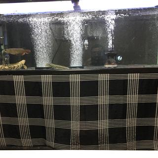 水槽 1200 大型 アロワナ