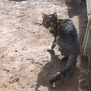 飼い主を探しています(鰺ヶ沢町-迷い猫)