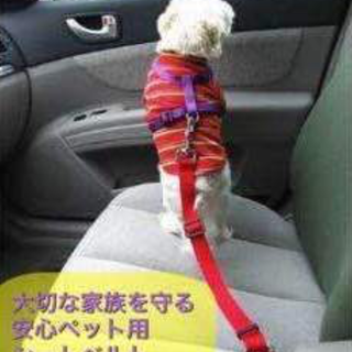 ペット用安全シートベルト  レッド