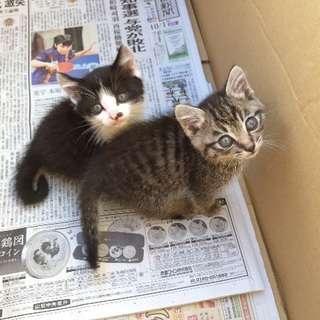 *野良猫2匹の里親を探してます*