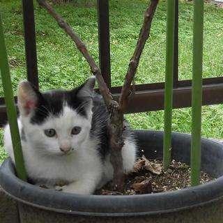 かわいい子猫の里親を募集しています。