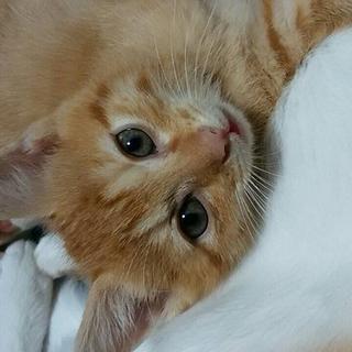 7月8月産まれの子猫ちゃん❤️