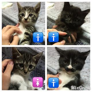 子猫4匹の里親さんの募集です