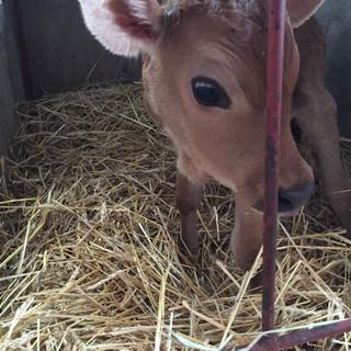 動物好き!田舎好き!新しい事始めたい方必見!